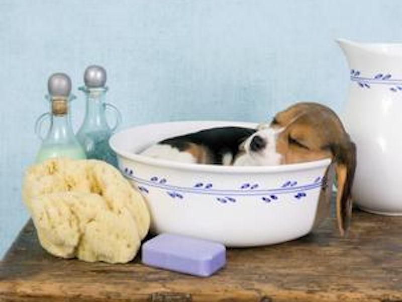 Pet supplies pet supplies plus dog wash pet supplies plus dog wash photos solutioingenieria Gallery