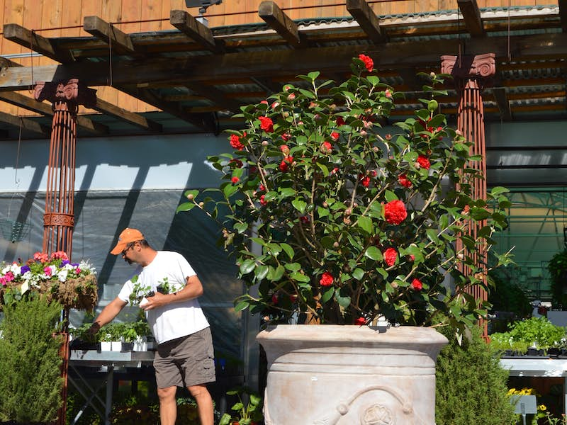 The new dallas farmers market restaurants local produce for Quirky home goods