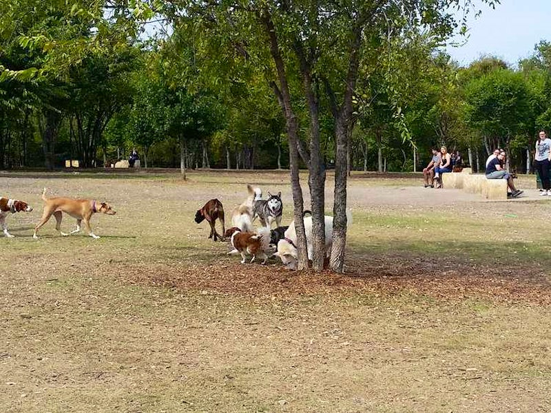 Central Bark Dog Park Hours