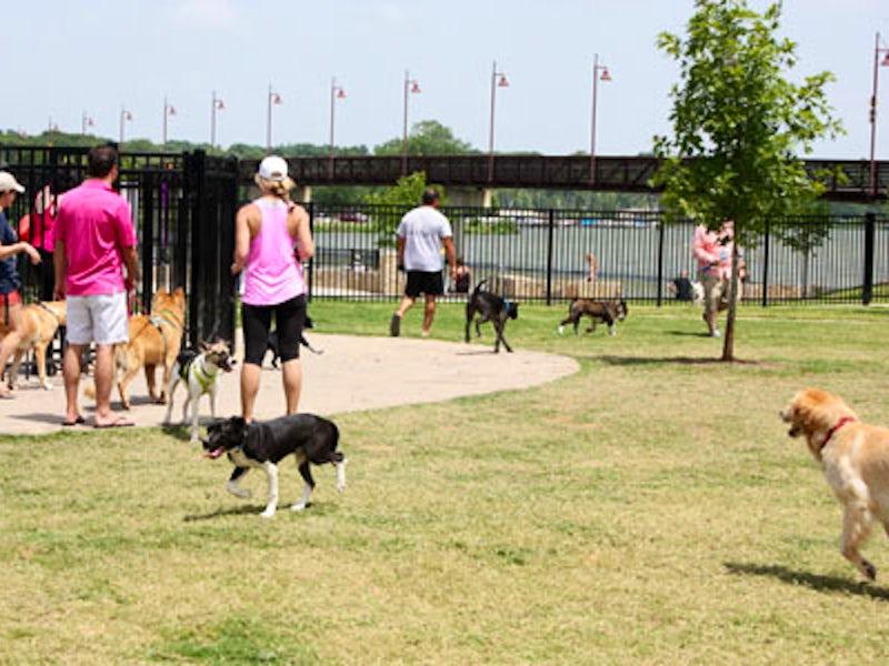 Off Leash Dog Park Dallas