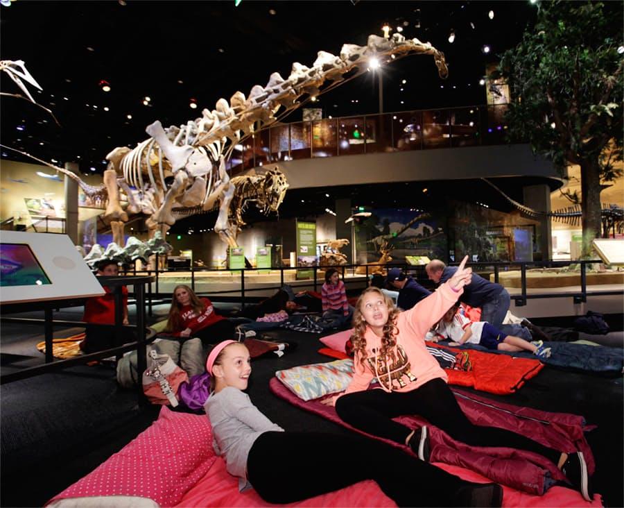 Museum Of Nature Sleepover
