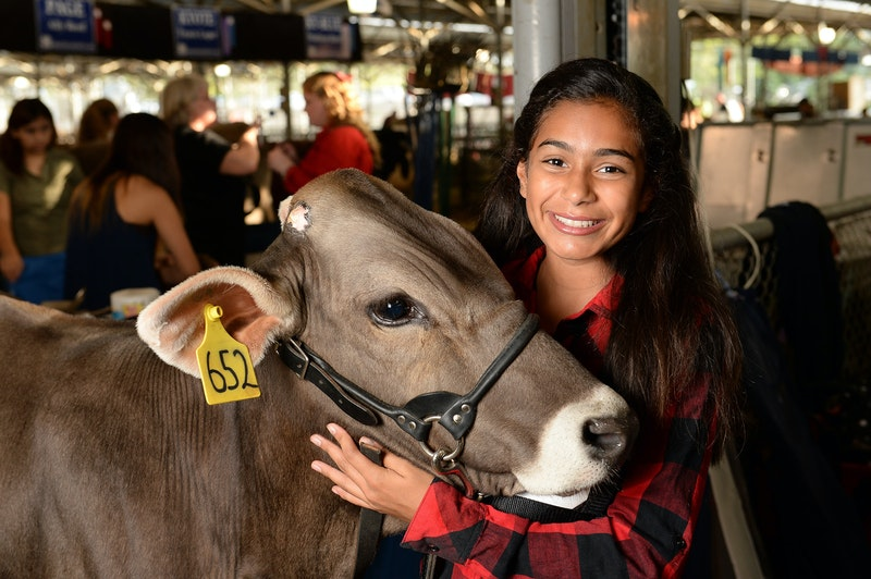 State Fair of Texas livestock